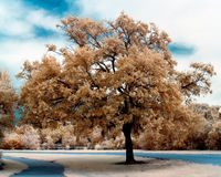 Árbol en infrarrojo Fotos de archivo libres de regalías