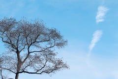 Árbol en invierno imagenes de archivo