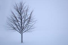 Árbol en invierno Foto de archivo