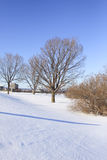 Árbol en invierno fotografía de archivo