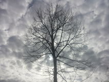 Árbol en invierno foto de archivo libre de regalías