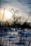 Árbol en invierno del campo Fotografía de archivo