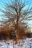 Árbol en invierno del campo Fotos de archivo libres de regalías