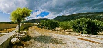 Árbol en Italia Fotos de archivo