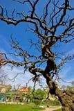 Árbol en jardín botánico en Zagreb imagen de archivo