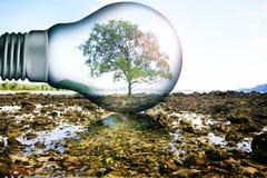 Árbol en lámpara grande Fotos de archivo libres de regalías