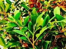 Árbol en la alameda de compras Imagen de archivo