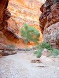 Árbol en la barranca de Arizona Imágenes de archivo libres de regalías