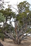 Árbol en la barranca magnífica foto de archivo