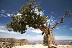 Árbol en la barranca magnífica, Arizona Fotos de archivo
