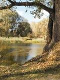 Árbol en la batería de río imagen de archivo