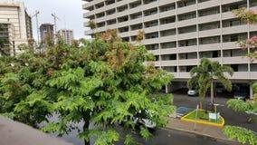 Árbol en la calle Waikiki Hawaii fotos de archivo libres de regalías