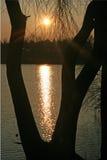 Árbol en la cara del lago Imagen de archivo libre de regalías