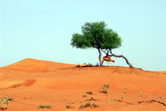 Árbol en la colina fotografía de archivo