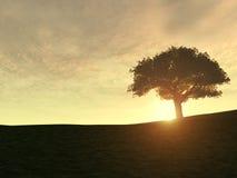 Árbol en la colina Ilustración del Vector