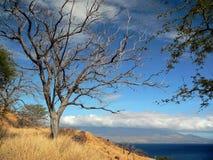 Árbol en la colina costera Foto de archivo libre de regalías