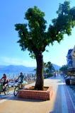 Árbol en la costa Imagen de archivo