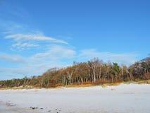 Árbol en la costa de mar Báltico, Lituania Imagenes de archivo