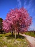 Árbol en la floración Foto de archivo