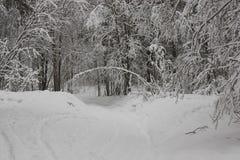 Árbol en la forma de arco en bosque del invierno Foto de archivo