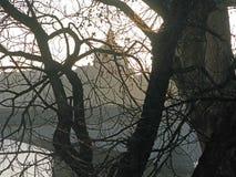 Árbol en la forma de la torre Eiffel Fotografía de archivo
