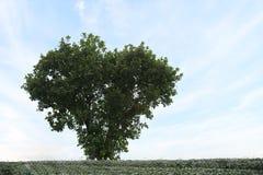 Árbol en la forma del corazón con el cielo azul claro Fotos de archivo libres de regalías