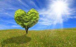 Árbol en la forma del corazón, concepto del eco Foto de archivo libre de regalías