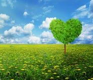 Árbol en la forma del corazón, fondo del día de tarjetas del día de San Valentín Imagen de archivo libre de regalías