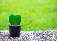 Árbol en la forma del corazón, fondo del día de tarjetas del día de San Valentín, Foto de archivo
