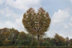 Árbol en la forma del corazón en otoño foto de archivo libre de regalías