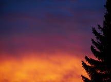 Árbol en la luz de la mañana Imagen de archivo libre de regalías