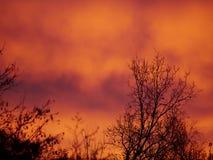 Árbol en la luz de la mañana Foto de archivo libre de regalías
