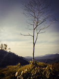Árbol en la montaña Foto de archivo libre de regalías