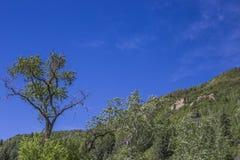 árbol en la montaña del parque de estado de Paonia, Colorado Fotografía de archivo libre de regalías
