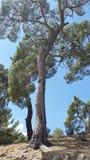 Árbol en la naturaleza Imagen de archivo libre de regalías