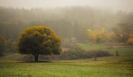 Árbol en la niebla foto de archivo libre de regalías