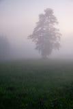 Árbol en la niebla Imágenes de archivo libres de regalías