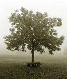 Árbol en la niebla. Foto de archivo