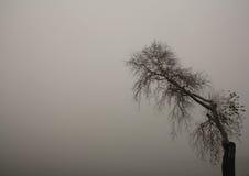 Árbol en la niebla Imagen de archivo libre de regalías