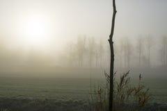 Árbol en la niebla Fotografía de archivo libre de regalías