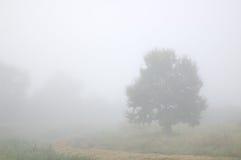 Árbol en la niebla Fotos de archivo libres de regalías