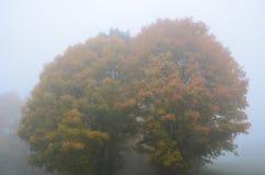Árbol en la niebla Foto de archivo