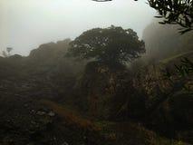 Árbol en la niebla imagen de archivo