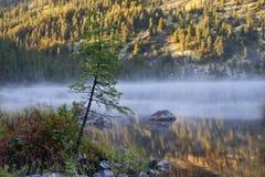 Árbol en la niebla de la mañana en el lago Foto de archivo libre de regalías