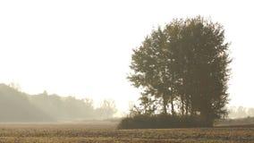 Árbol en la niebla del paisaje de la mañana almacen de video