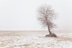 Árbol en la niebla en una playa del invierno Imagen de archivo libre de regalías