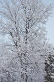 Árbol en la nieve 1 Imagen de archivo libre de regalías