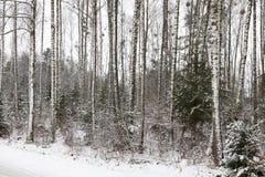 Árbol en la nieve Fotografía de archivo