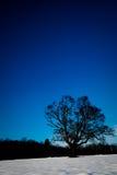 Árbol en la nieve con el cielo azul Fotografía de archivo