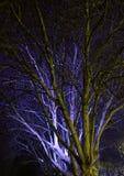 Árbol en la noche Fotos de archivo libres de regalías